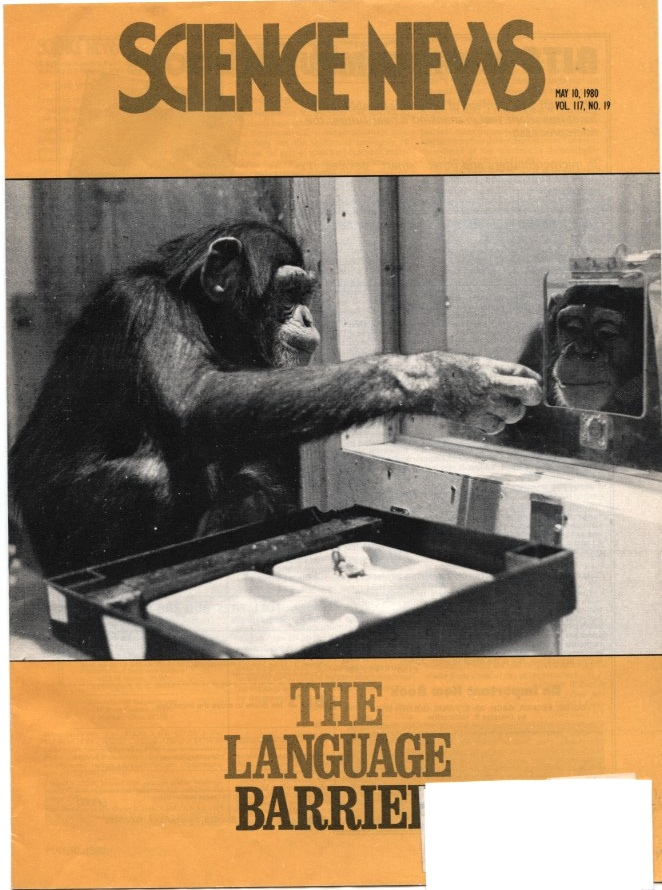 Science News May 10 1980 Apes and Language