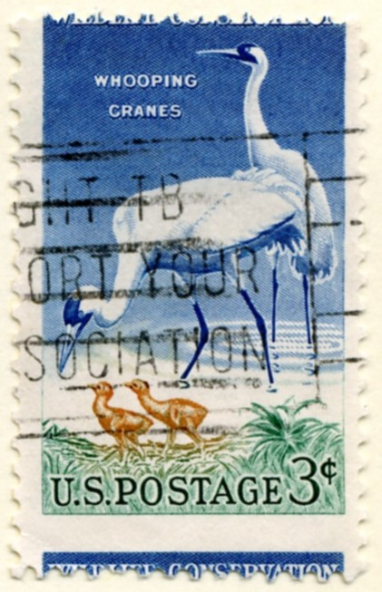 Scott 1098 3 Cent Stamp Wildlife Conservation Whooping Cranes a
