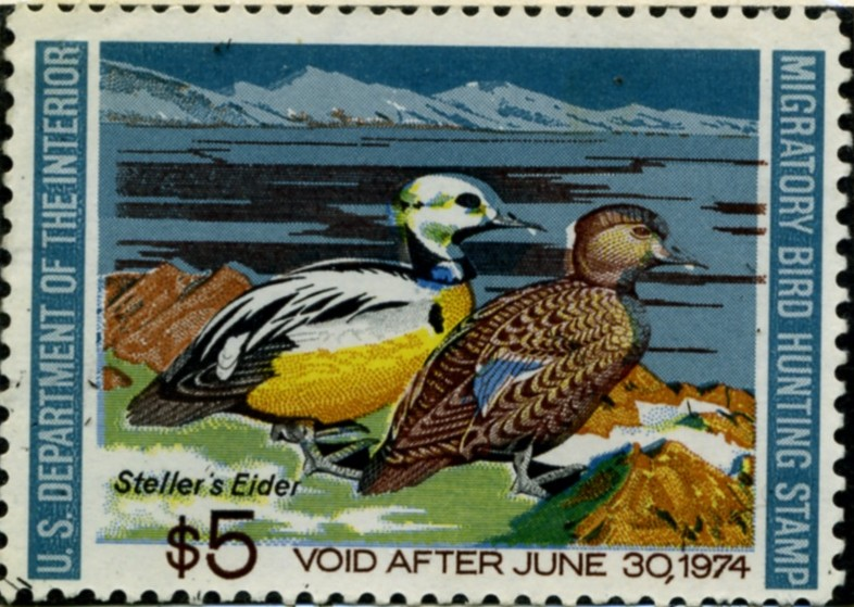 Scott RW40 5 Dollar Department of the Interior Duck Stamp Stellers Eider