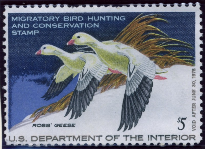 Scott RW44 5 Dollar Department of the Interior Duck Stamp Ross Geese
